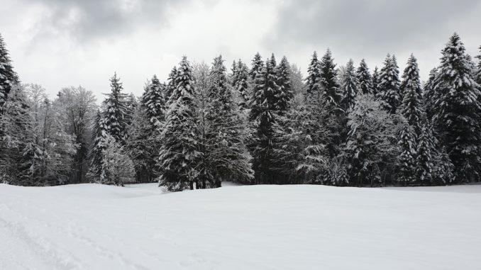 Weg zur Kirchsteinhuettte im WInter